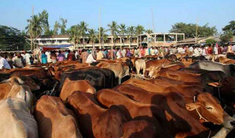 Best Bangladesh Eid Al-Fitr Feast - Cattle-Market-Collected  Pictures_208360 .jpg?x26400
